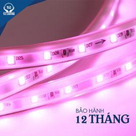 led-day-happy-tlc-lighting-4